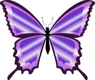 A beautiful colorful purple butterfly Royalty Free Stock Photo