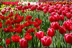 Beautiful flower garden with colorful blooming flowers Royalty Free Stock Photos