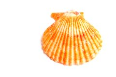 Beautiful colorful seashell Royalty Free Stock Image