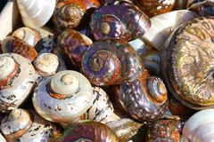 Beautiful colorful shells freshly caught in Herakleio. Greece spiral beach seafood edible mixed rare summer lots mollusk different many cockleshell brown royalty free stock image