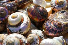 Beautiful colorful shells freshly caught in Herakleio. Greece spiral beach seafood edible mixed rare summer lots mollusk different many cockleshell brown stock photo