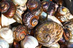 Beautiful colorful shells freshly caught in Herakleio. Greece spiral beach seafood edible mixed rare summer lots mollusk different many cockleshell brown royalty free stock images