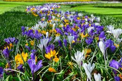 Beautiful colorful spring flowers in park in Netherlands royalty free stock photography
