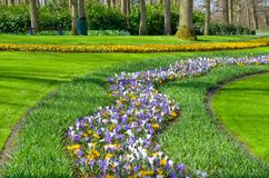 Beautiful colorful spring flowers in park in Netherlands Holland Stock Photo