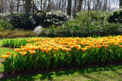 Beautiful colorful spring flowers in park in Netherlands stock photos