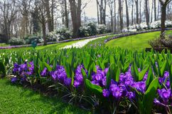 Beautiful colorful spring flowers in park in Netherlands stock photo