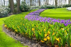 Beautiful colorful spring flowers in park in Netherlands Holland Royalty Free Stock Photo