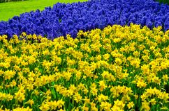 Beautiful colorful spring flowers in park in Netherlands Holland Stock Photography