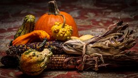Beautiful and colorful squash, bumpy gourds, flint corn, and a pumpkin lie on a table during autumn. This photograph would be ideal for fall, autumn stock images