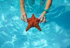 Beautiful colorful starfish in girl hands royalty free stock photos