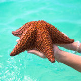 Beautiful colorful starfish in girl hands stock photo