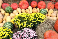Still life with lot of flowers and autumn vegetables Royalty Free Stock Photo