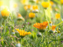 Beautiful colorful summer flowers Stock Image
