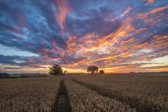 Late summer on the fields in germany in the morning Royalty Free Stock Photography