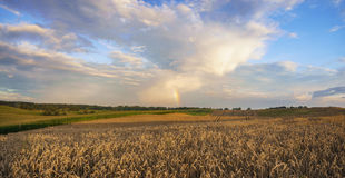 Late summer on the fields in germany in the morning Royalty Free Stock Image