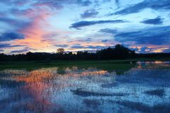 Sunset over rice field royalty free stock photo