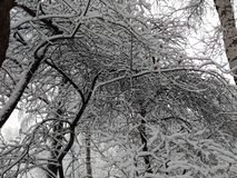 Snowy winter trees 4. Beautiful colorful texture and background, good for you. Snowy winter trees near my house. Moscow, Russia royalty free stock photos