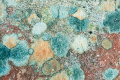 Beautiful colorful textured stone background Stock Image