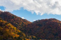 Beautiful colorful trees on mountain with blue sky in autumn season.  stock image