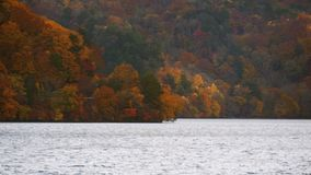 Beautiful colorful trees on mountain and lake in autumn season.  stock footage