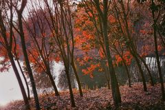The trees and lake in park. The beautiful colorful trees in park in the morning royalty free stock image