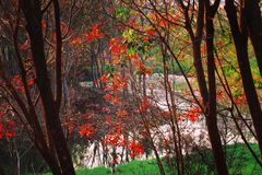 The trees and lake in park. The beautiful colorful trees in park in the morning stock images