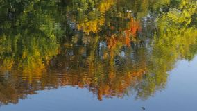 Reflection in water. Beautiful colorful trees reflected in the water of the lake stock video