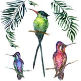 Beautiful colorful tropical birds sitting on branches isolated on white background.