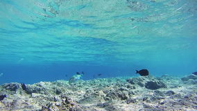 Beautiful Colorful Tropical Fish on Coral Reefs Underwater in the Red Sea. Egypt. stock video footage