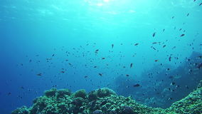 Beautiful Colorful Tropical Fish on Vibrant Coral Reefs Underwater in the Red Sea. Egypt. Sealife in the Red Sea. Diving near a coral reef in the red sea stock footage