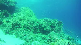 Beautiful Colorful Tropical Fish on Vibrant Coral Reefs Underwater in the Red Sea stock footage