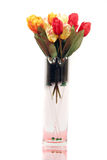 Beautiful colorful tulips - isolated on white background Stock Image
