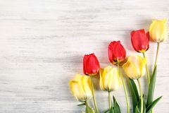 Beautiful colorful tulips. On light wooden background Royalty Free Stock Images