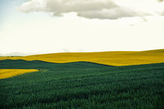 Beautiful colorful view of blooming rapeseed plants and rural Stock Image