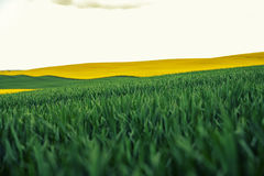 Beautiful colorful view of blooming rapeseed plants and rural Royalty Free Stock Photos