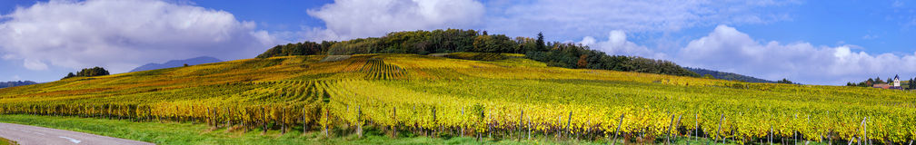 Beautiful colorful vineyards, autumn in Alsace Stock Photos