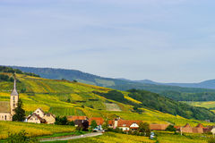 Beautiful Colorful Vineyards In Alsace, Autumn Royalty Free Stock Photography