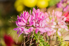 Beautiful colorful western tare in the garden Stock Image