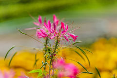 Beautiful colorful western tare in the garden. Stock Photos