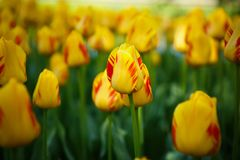 Beautiful flower garden with colorful blooming flowers Stock Photo