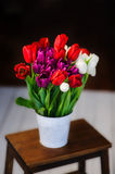 Beautiful colorfull tulips in the bucket. White, pink and red tulips in the bucket on the wooden table Stock Photo