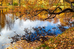 Beautiful colors of autumn landscape by the lake Stock Images