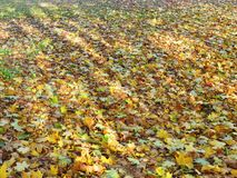 Beautiful colors autumn leaves , Lithuania Royalty Free Stock Photos