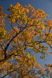 Beautiful colors of autumn leaves Royalty Free Stock Photos