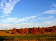 Beautiful colors of fall. Picture of the beautiful view with unique colors of the trees and blue sky Stock Photo