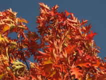 Beautiful colors of the fall Stock Photography