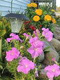 Bright Colored Flowers around a Country Home! Royalty Free Stock Photos
