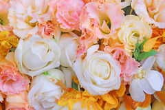 Beautiful colors of flowers Stock Photography