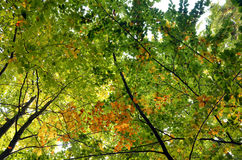 Beautiful colors of leaves Stock Photography