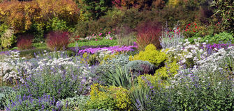 Beautiful colors of perennials. In autumn. Especially nice stand asters and ornamental grass in the background stock photos